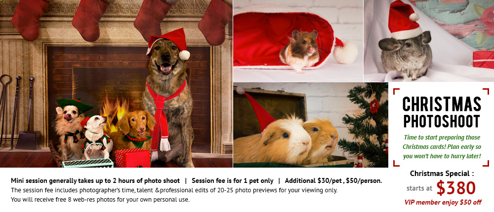 Christmas Pets Photography