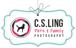 Pets Photography at C.S.Ling Photography