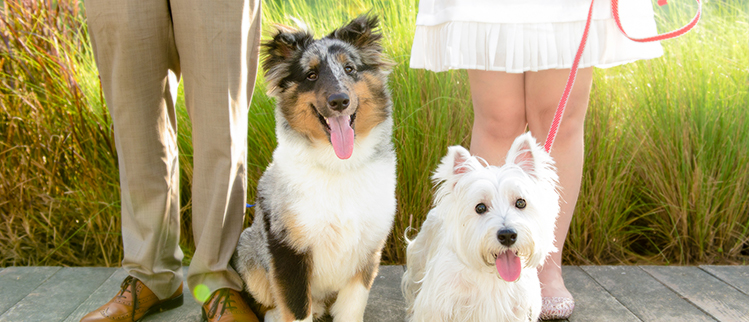 Pets Photography in Singapore