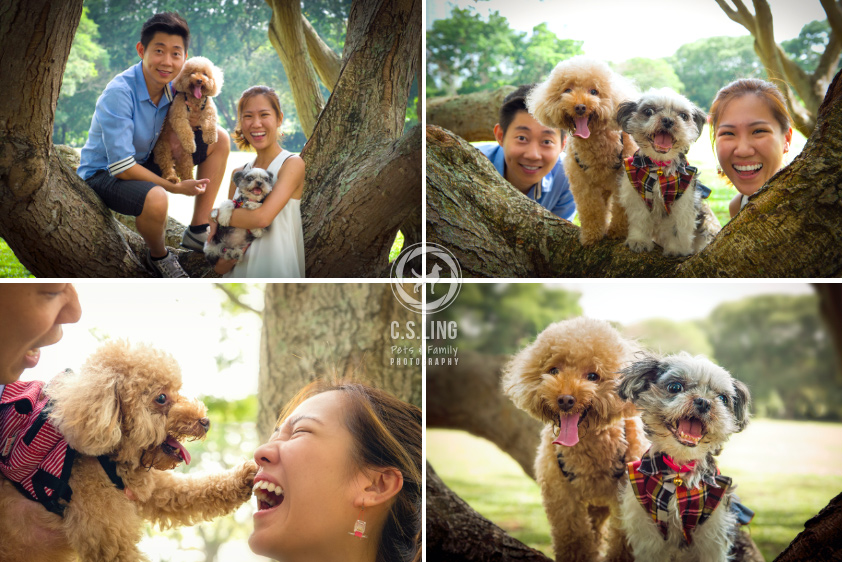 Sherwin and Winnie Photo Montage - Singapore Dogs Photography