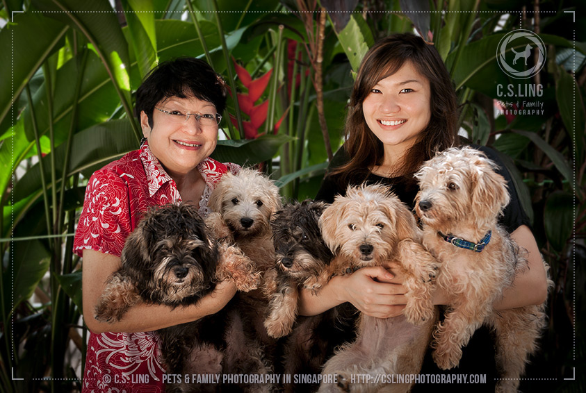 Schnau-Tzu puppies with family -Dog Photography in Singapore - C.S.Ling Photography