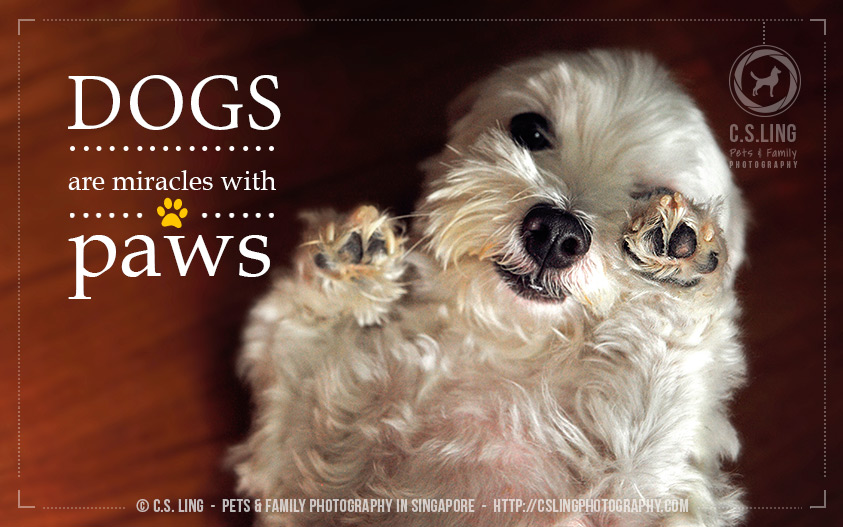 Dog Quotes: Dogs are miracles with paws. - Photo by C.S.Ling Pets and Family Photography