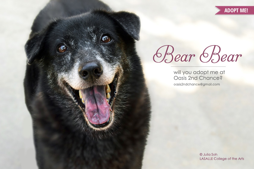 Oasis-2nd-chance-adopt-BearBear_web