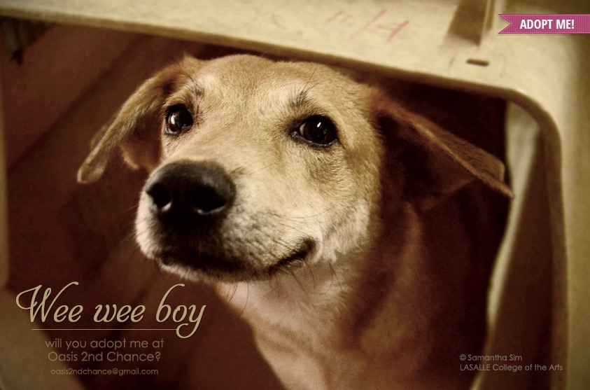 Oasis-2nd-chance-adopt-Wee-Wee-Boy
