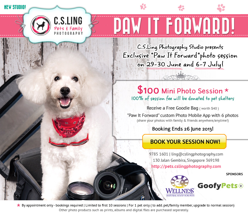 Paw It Forward - Singapore Pet Photography for a Good Cause