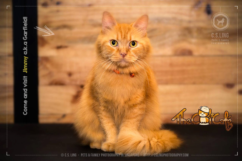 cat_cafe_singapore_csling