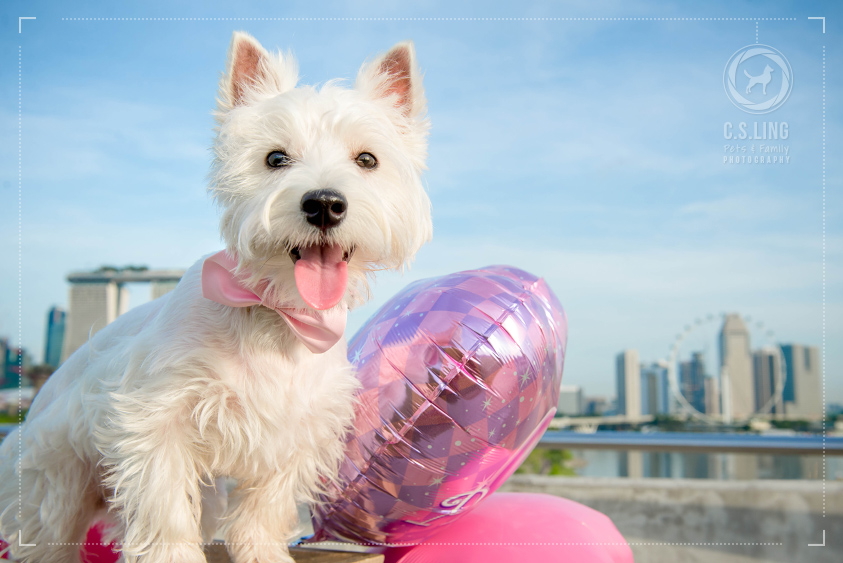 Westie Marina Singapore Flyer Pet Photography