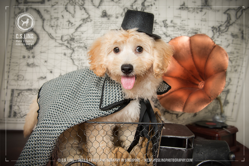 concept-dog-photo-sherlock-holmes_cute