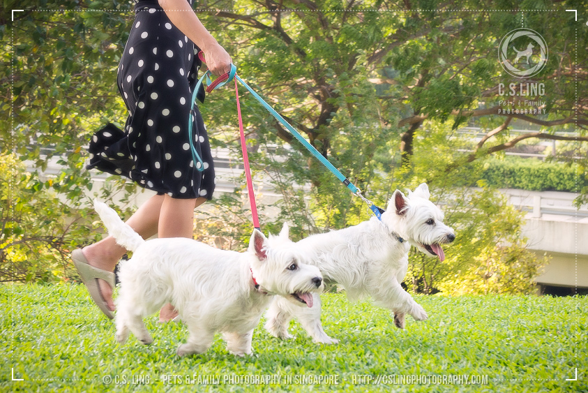 csling-singapore-pet-photos-westies