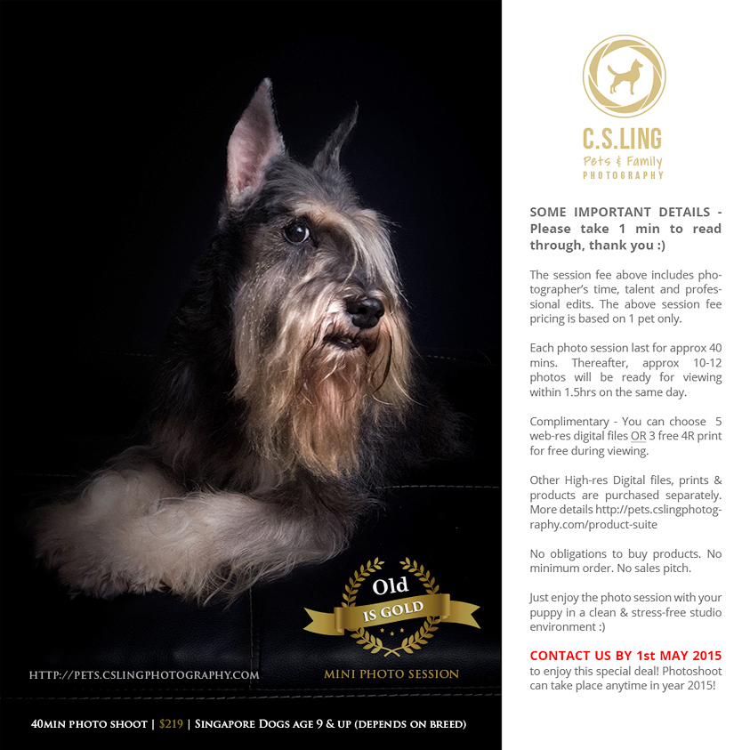 Celebrate your pet's life journey with beautiful and memorable photos at our OLD IS GOLD mini studio session.