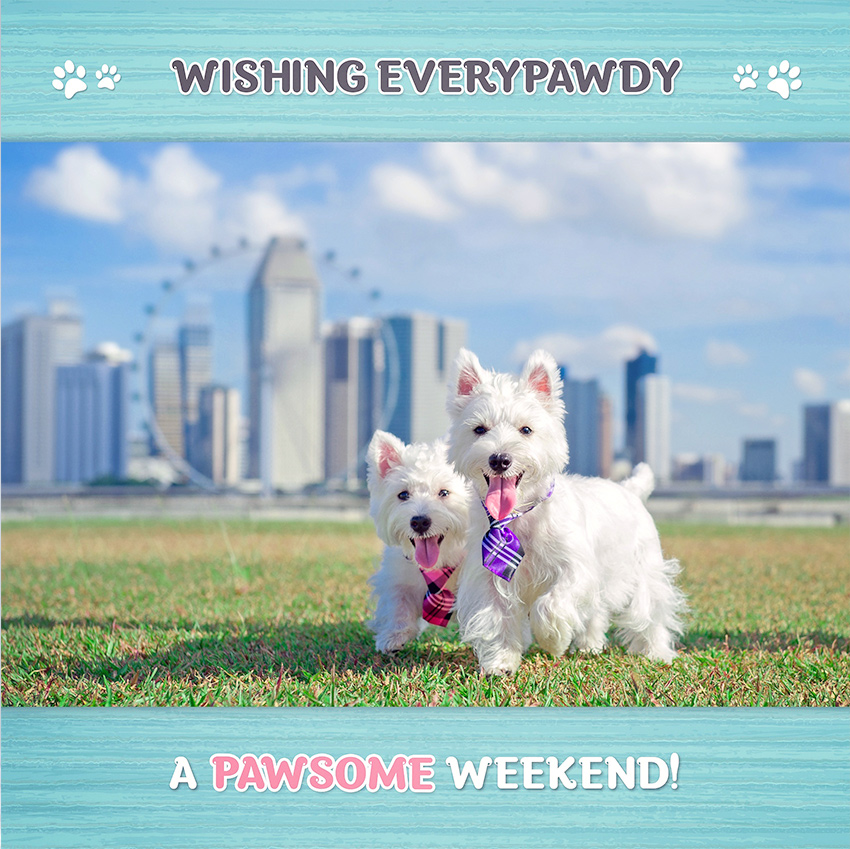 Westie Puppies in Singapore Marina Barrage by C.S.Ling Dog Photography
