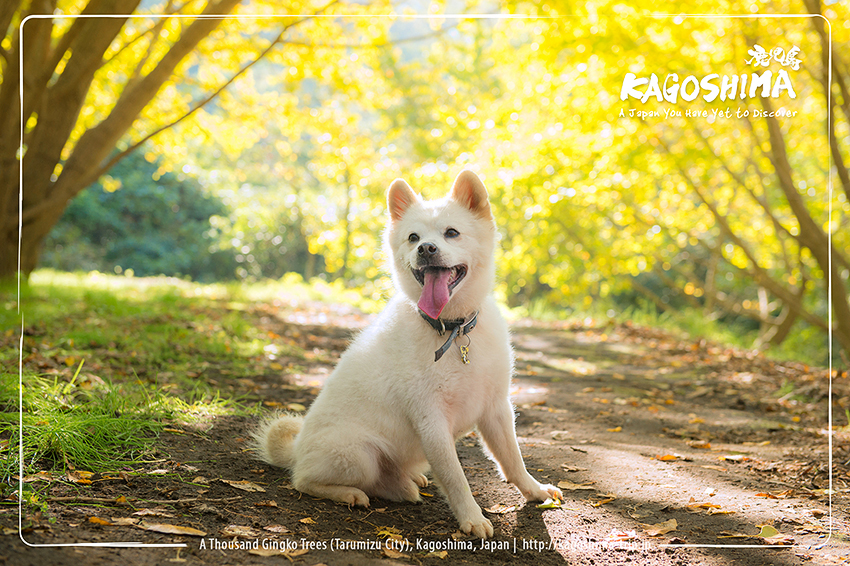 Pet Photography in Kagoshima by C.S.Ling
