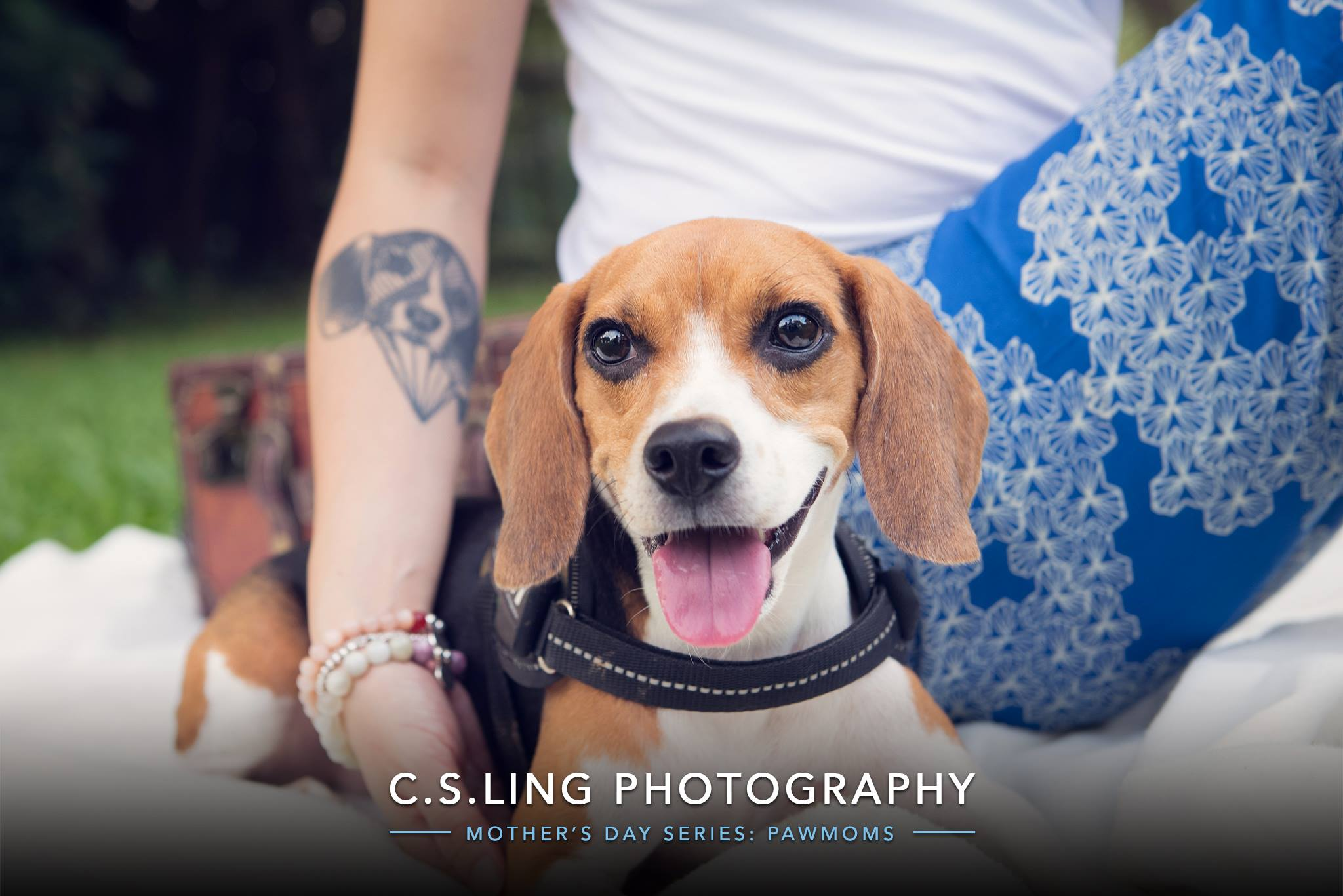 Beagle Dog Photography Singapore