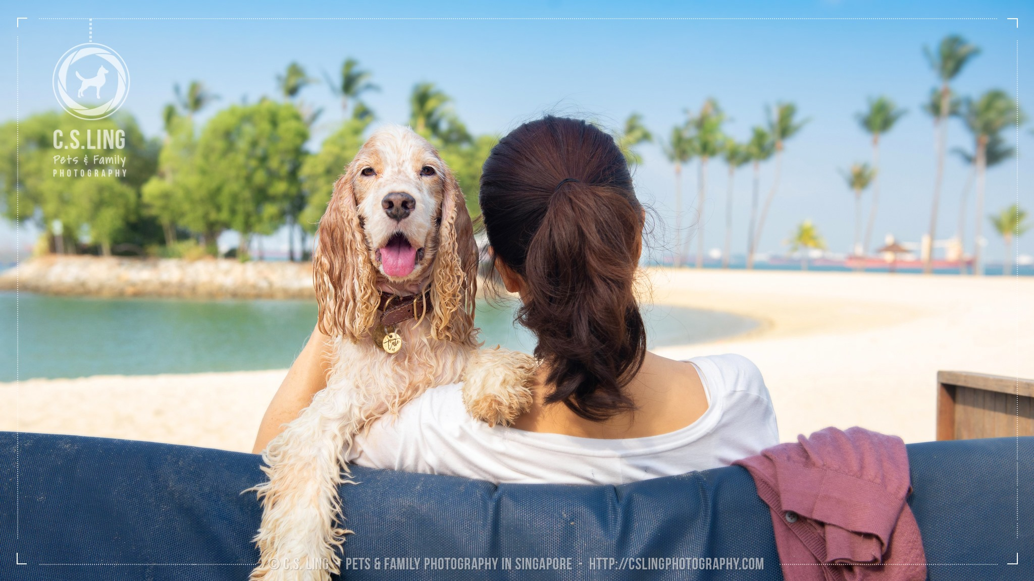 Singapore Dog at beach - Pets Photography
